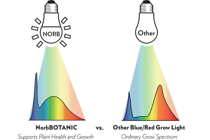 NorbBOTANIC spectrum for plant health compared to other blue/red grow light spectrums.
