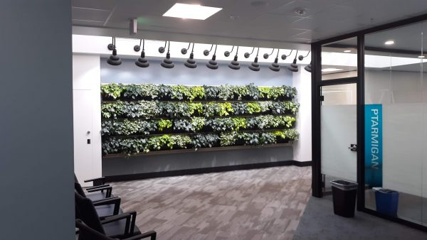 LiveWall brand living wall from Rocky Mountain Living Walls
