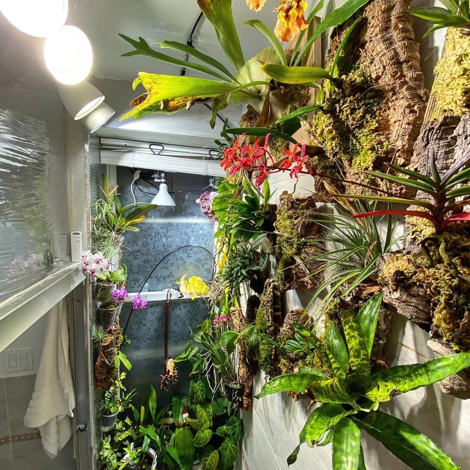 Robert's apartment orchidarium